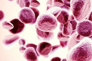 基础免疫学