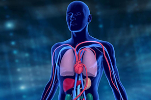 心血管外科学